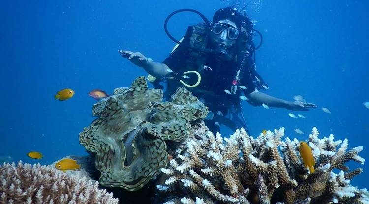 Scuba Diving in Andamans: Best Time, Dive Sites, Cost